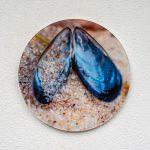 Acryglas Druck rund – Muschel