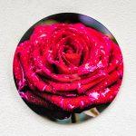Acryglas Druck rund – Rose